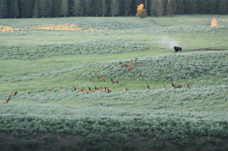 Herd1
