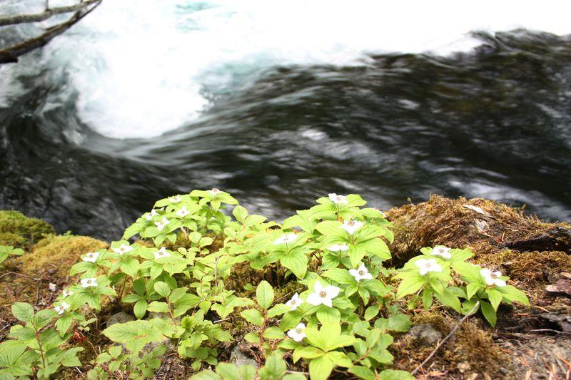 Flowerwater